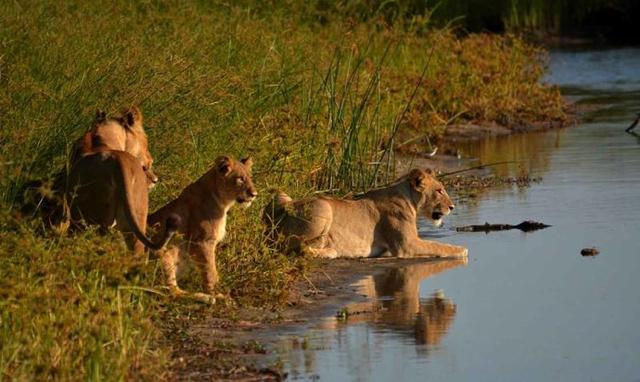 africa photo safari botswana-07G6.jpg