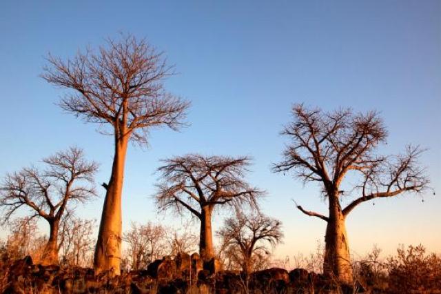 africa photo safari botswana-07G5.jpg