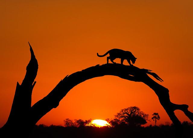 africa photo safari botswana-07G4.jpg
