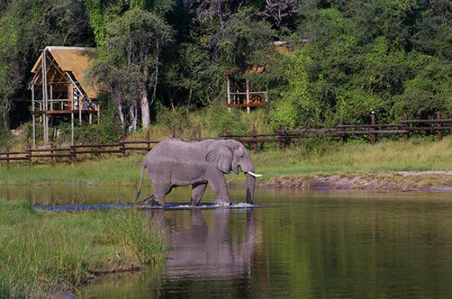 africa photo safari botswana-07G3.jpg
