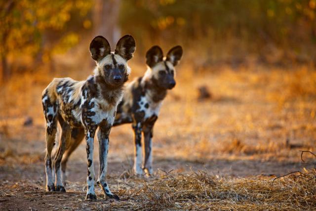 africa photo safari botswana-07G2.jpg
