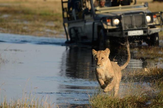 africa photo safari botswana-07G1.jpg