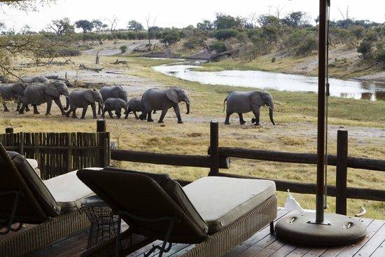 africa photo safari botswana-07G215.jpg