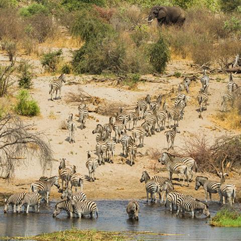 africa photo safari botswana-05g26.jpg