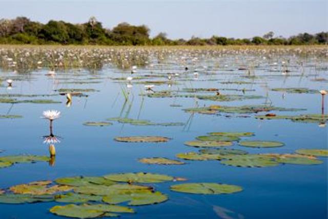 africa photo safari botswana-05g23.jpg