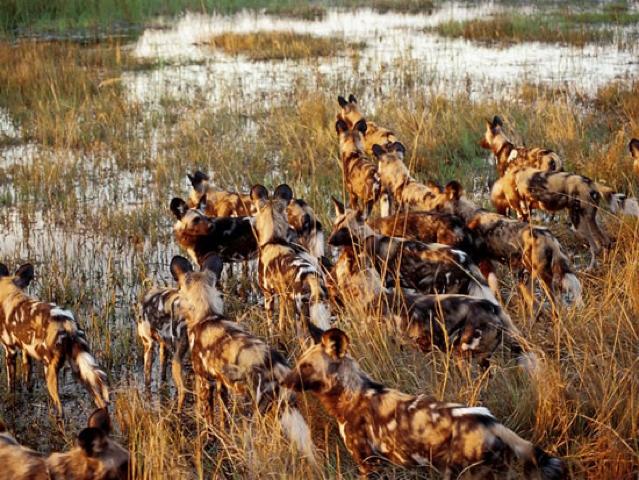 africa photo safari botswana-05g24.jpg