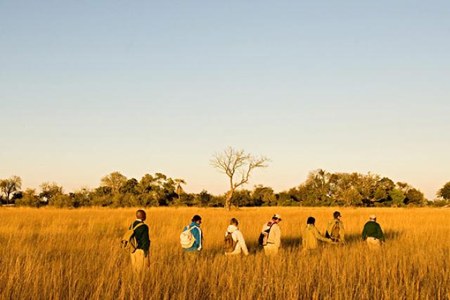 africa photo safari botswana-05g21.jpg
