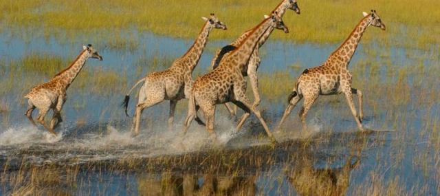 africa photo safari botswana-05g11.jpg