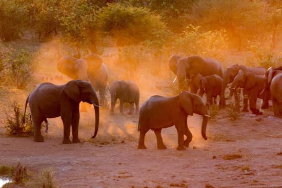 Africa_Photographic_Safari_CampChobe_10.jpg