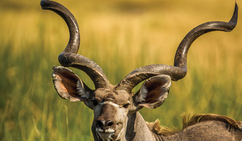 Africa_Photographic_Safari_CampChobe_6.jpg