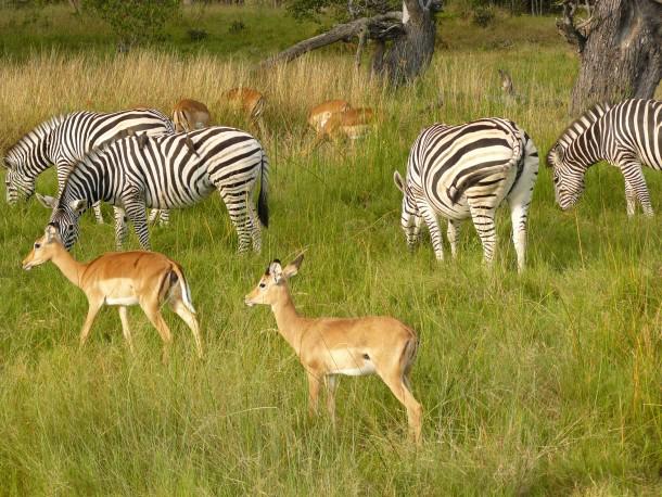 Africa_Photographic_Safari_CampChobe_9.jpg