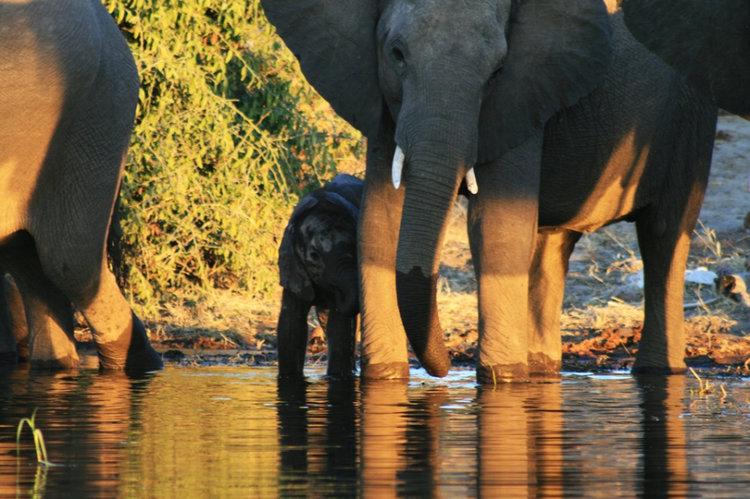 Africa_Photographic_Safari_CampChobe_1.jpg