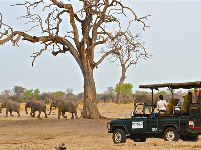 africa safari Zimbabwe21.jpg