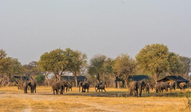 africa safari Zimbabwe11.jpg