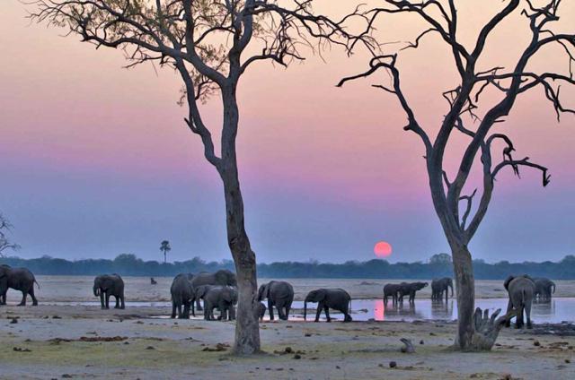 africa safari Zimbabwe7.jpg