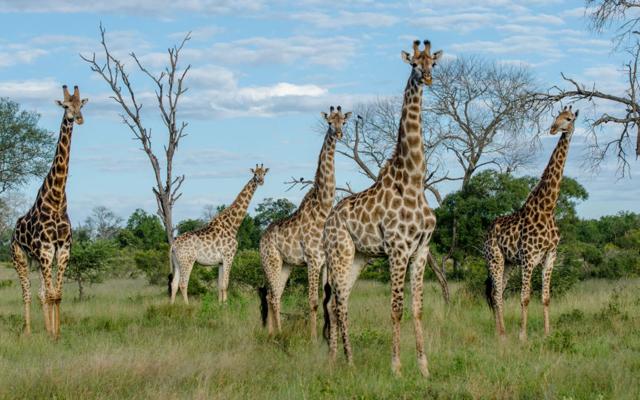 africa safari Zimbabwe6.jpg
