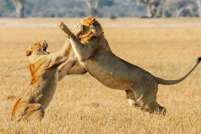 africa safari Zimbabwe4.jpg