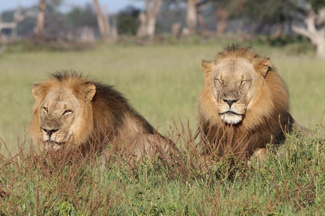 africa safari Zimbabwe1.jpg