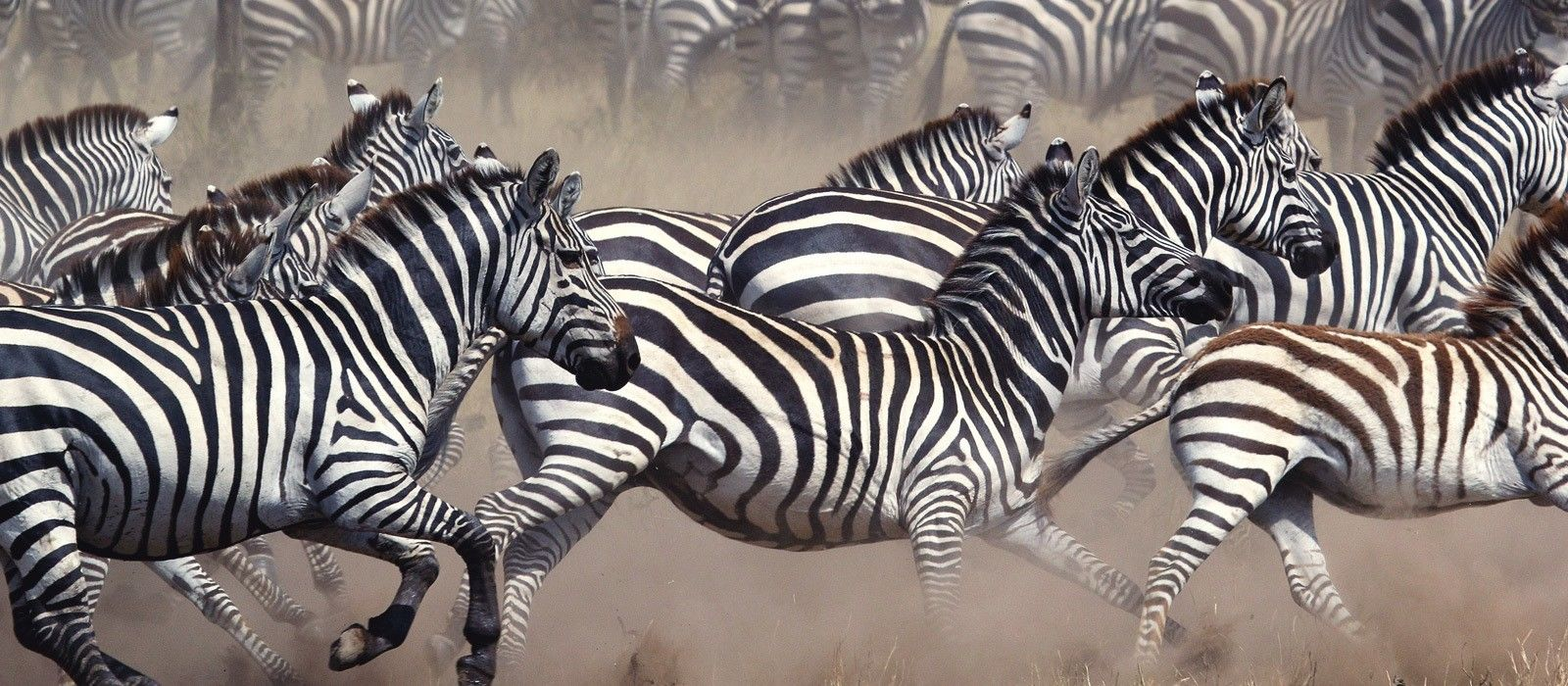 tanzania-and-botswana-safari-highlights-tour-trip-4.jpg