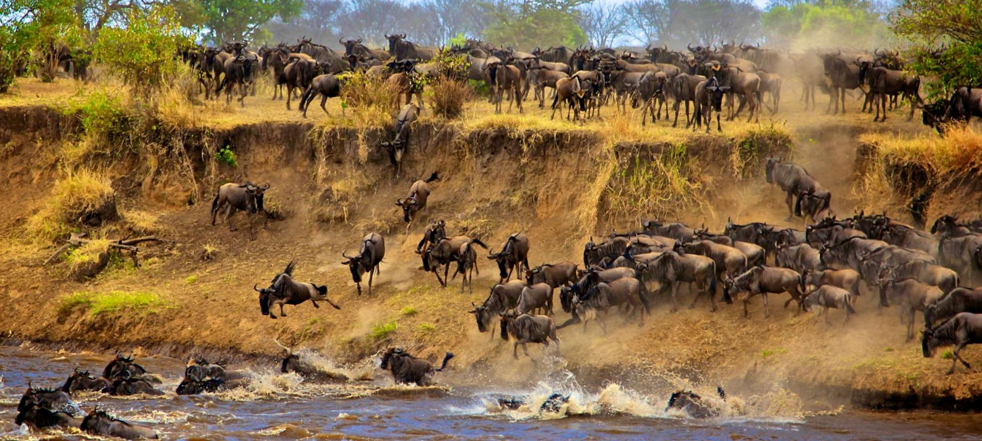 wildebeest-migration__1920x864.jpg