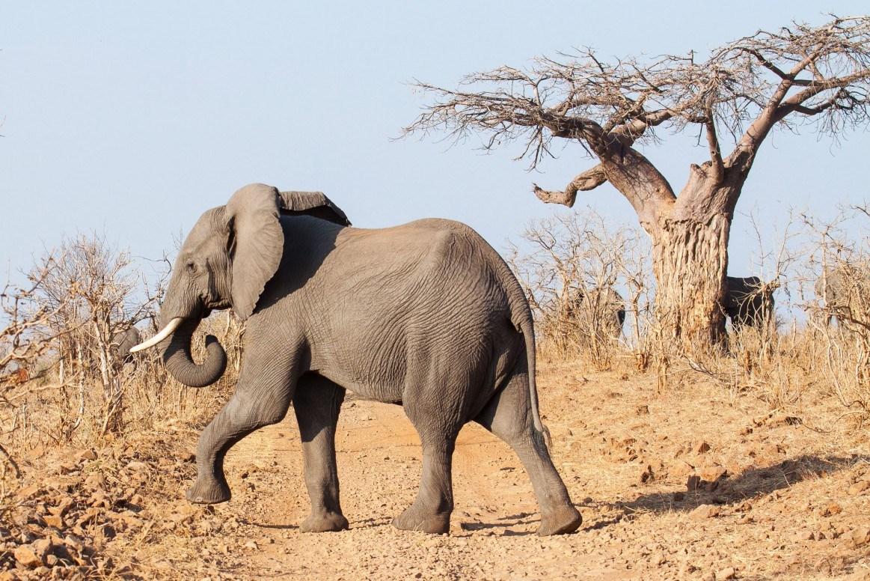 10 DAY BEST OF BOTSWANA - • Chobe Game Reserve • Moremi Game Reserve • Okavango Delta• Makgadikgadi Game Reserve10 DAYS / 9 NIGHTS