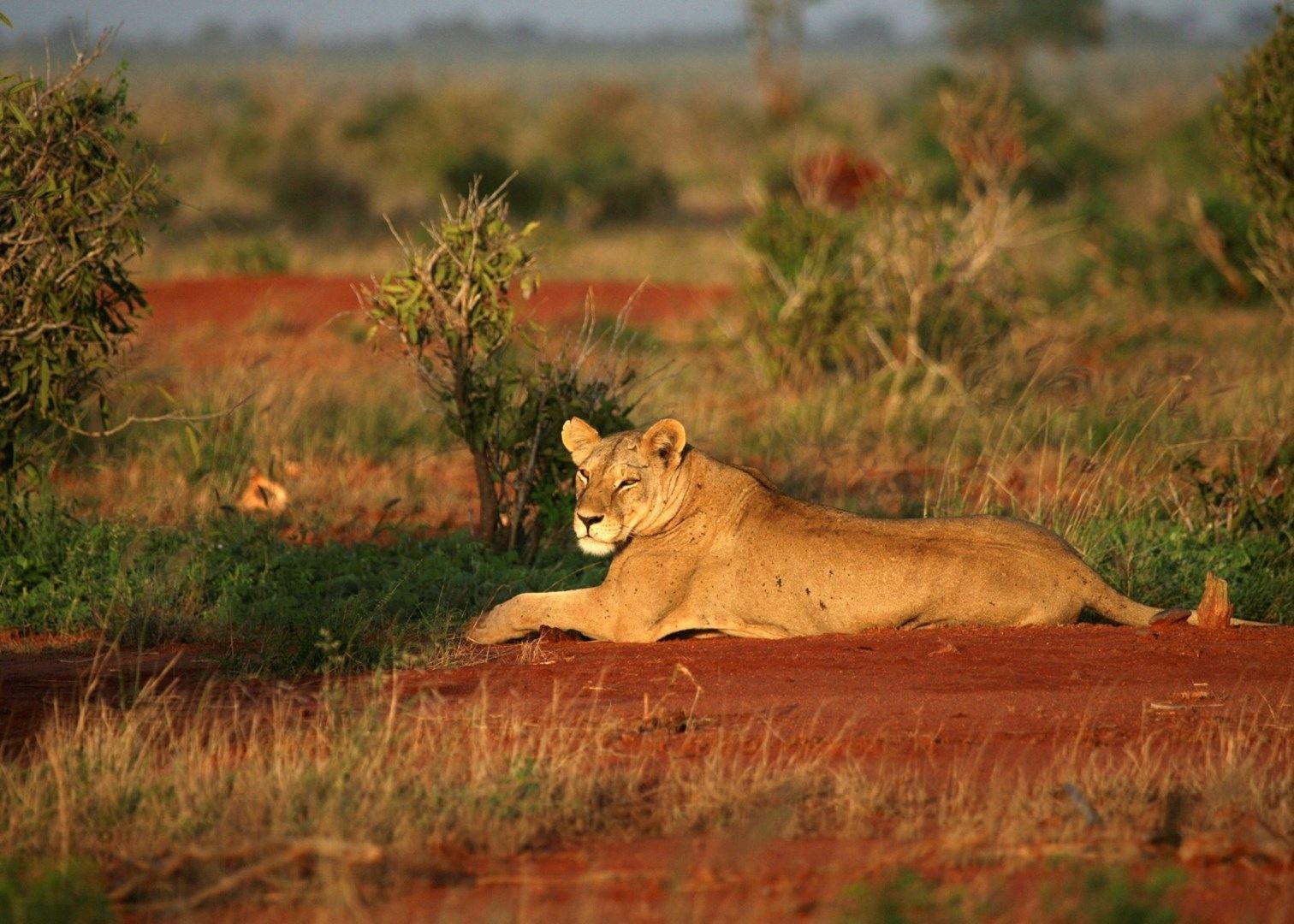 africa safari masai mara 19.jpg