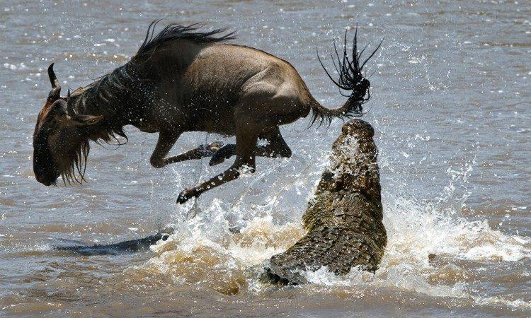 africa safari masai mara 15.jpg