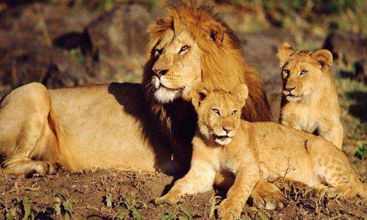africa safari masai mara 14.jpg
