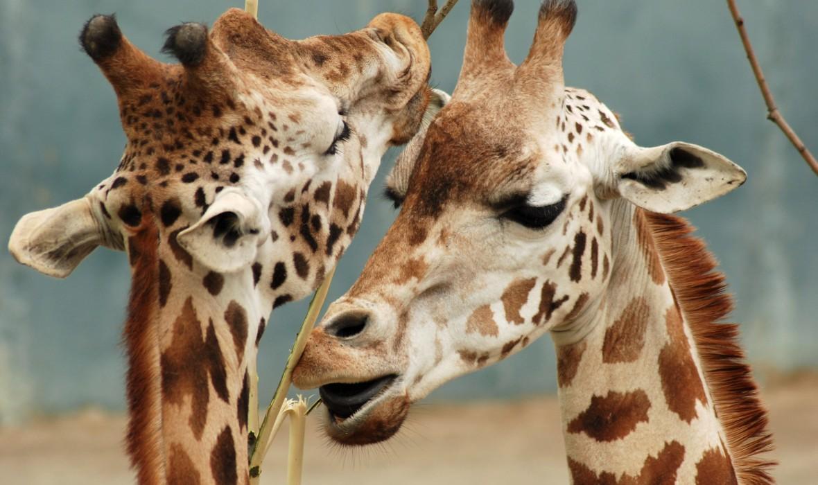 africa safari masai mara 12.jpg