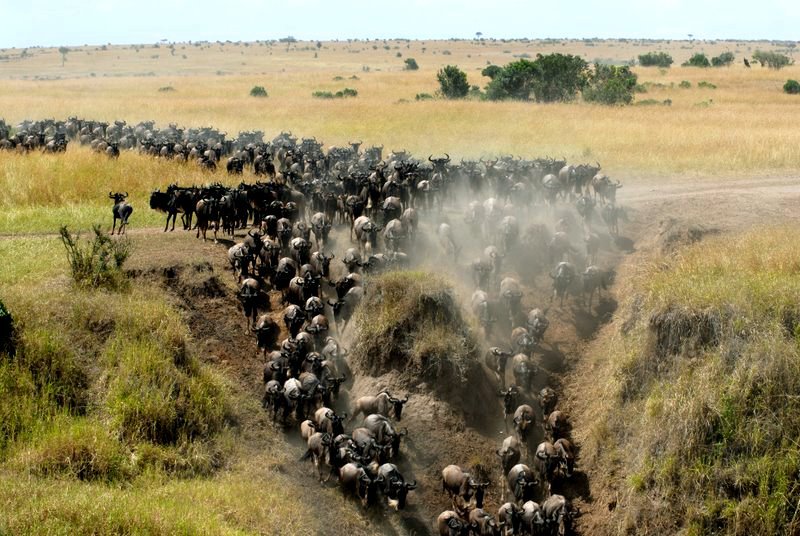 africa safari masai mara 11.jpg