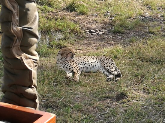 africa safari northern serengeti 8.jpg