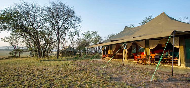 africa safari northern serengeti 2.jpg