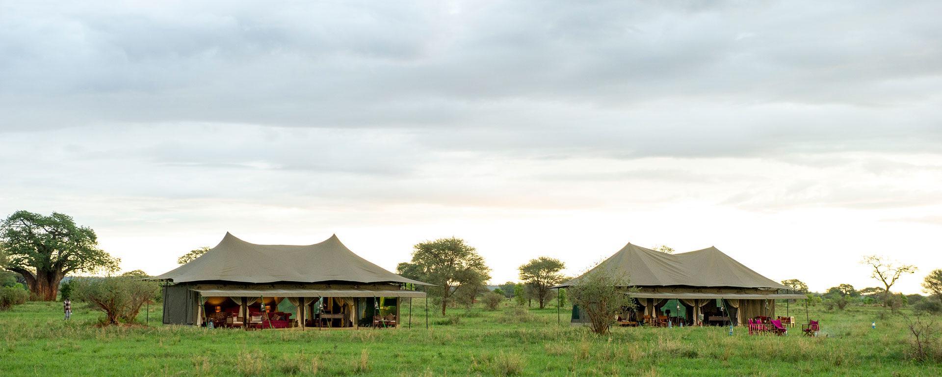 africa safari.jpg