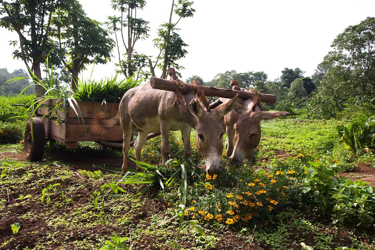 africa safari  nogorogoro accomm 14.jpg