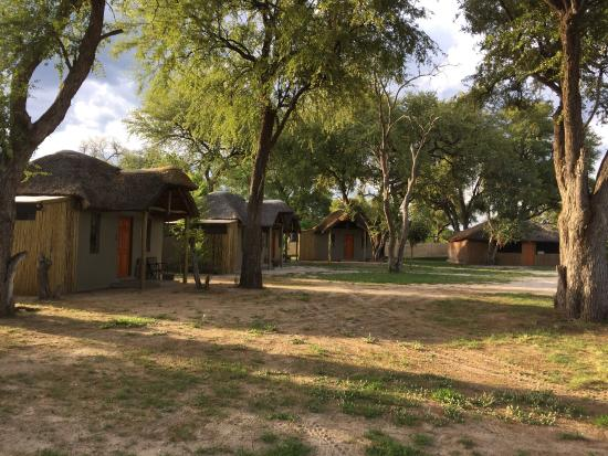 africa safari  khwai 11.jpg