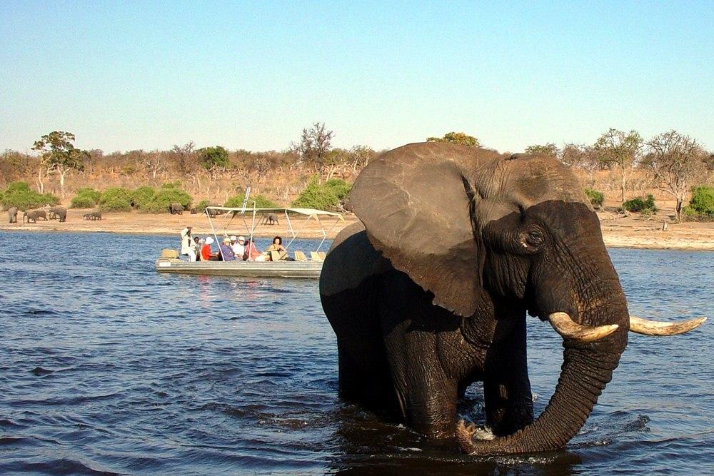 africa safari chobe 17.jpg