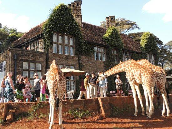 africa safari nairobi 2.jpg