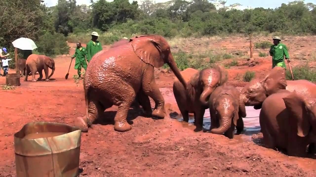 africa safari nairobi 5.jpg