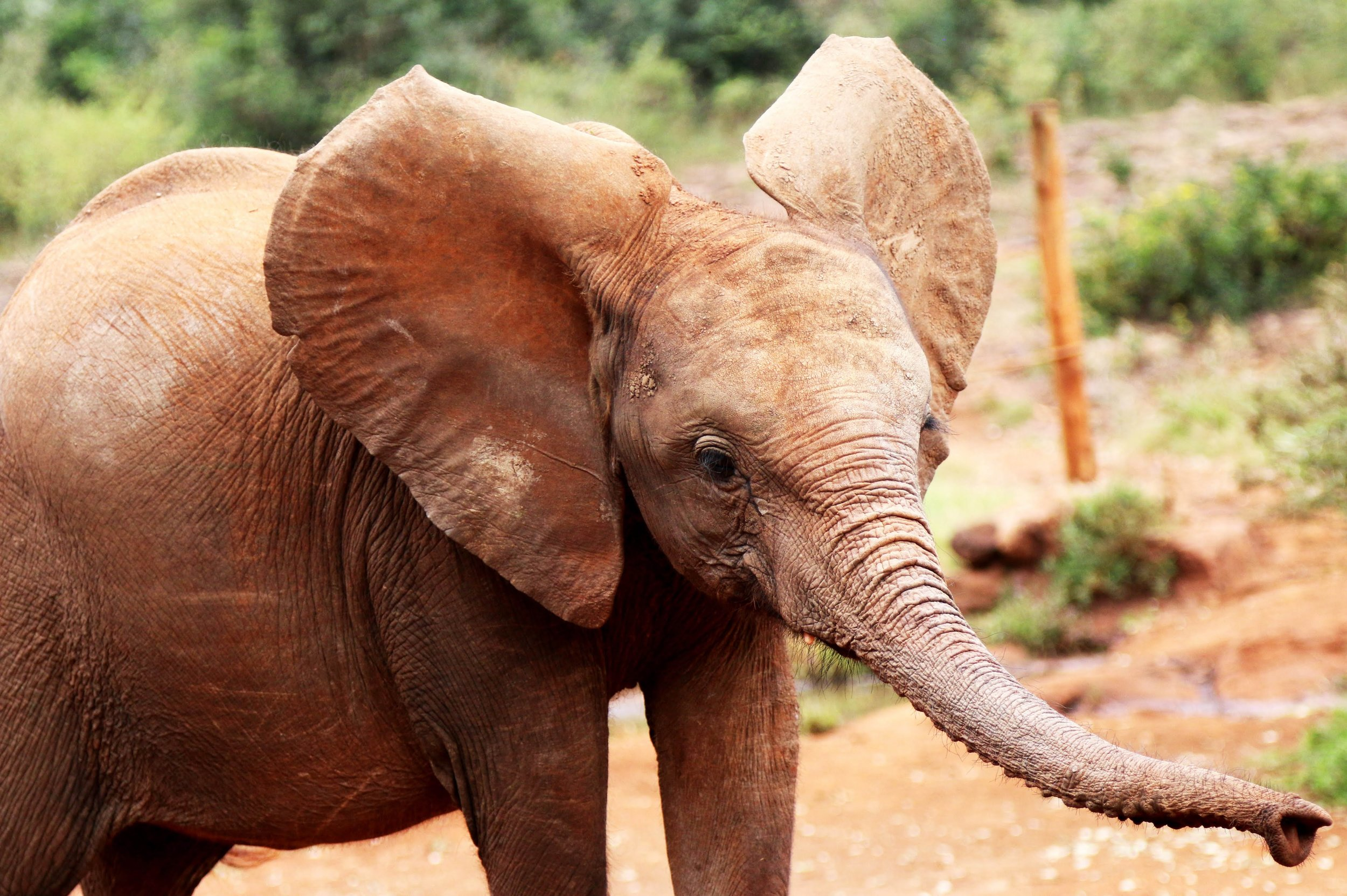 africa safari nairobi 6.jpg
