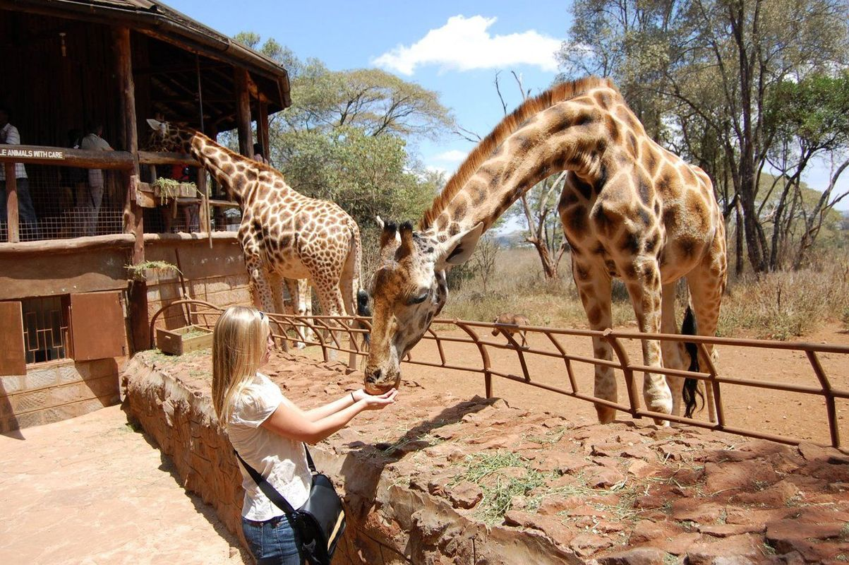 africa safari nairobi 30.jpg