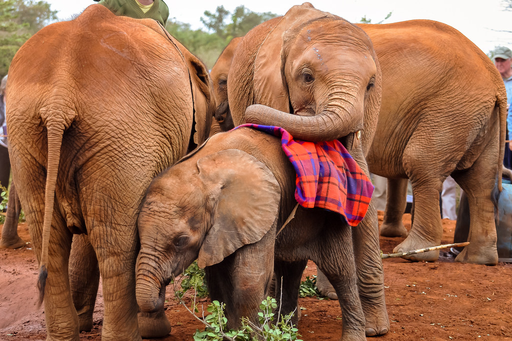 africa safari nairobi 31.jpg