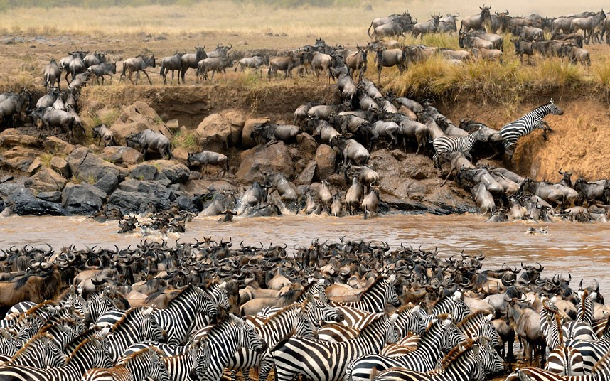 11 DAY LUXURY TANZANIA & KENYA**** -