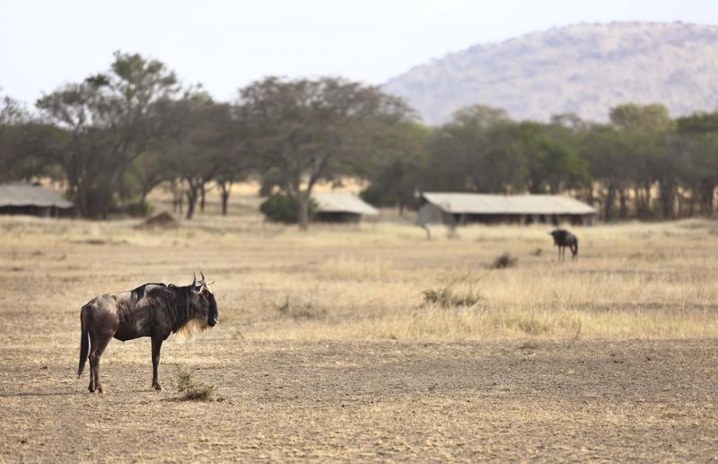 Kenya21.jpg