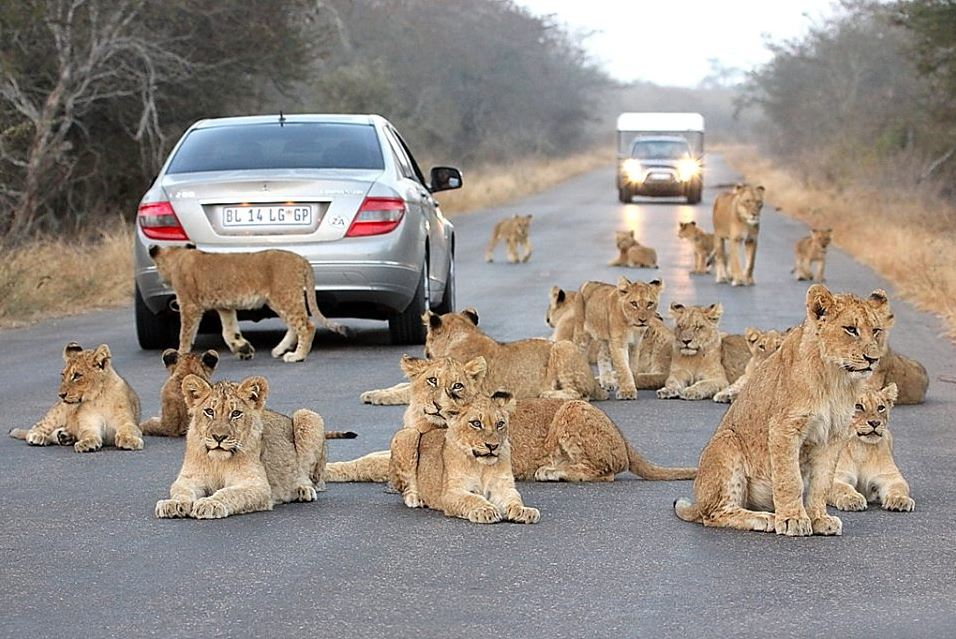 Day 1,2,3: KRUGER NATIONAL PARK - Where nearly 2 million hectares of unrivaled diversity of life forms fuses with historical and archaeological sights - this is real Africa.The world-renowned Kruger National Park offers a wildlife experience that ranks with the best in Africa