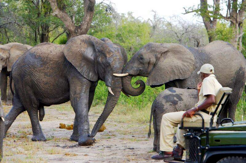 7 day greater krugerSAFARI -