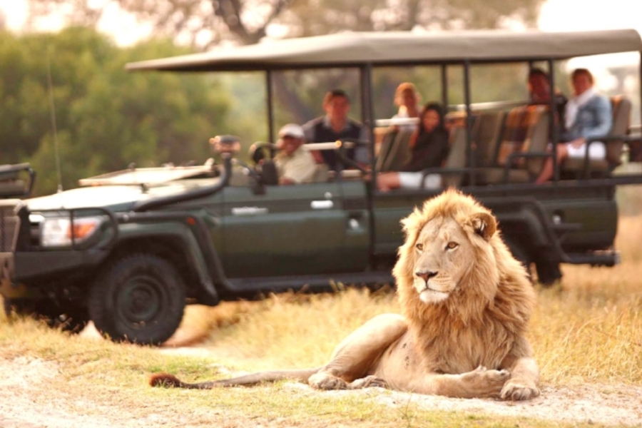 INCLUSIVETY - Our safaris include friendly airport meet and greets, wildlife viewing from 4×4 vehicles guided walks, and even boat / canoe trips. English speaking local guides, all meals (unless indicated otherwise), park fees, accommodations, laundry, and road / air transfers.There are no hidden fees.