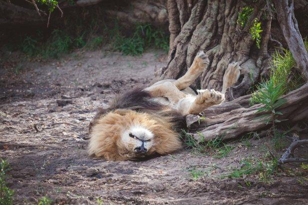safari5b.jpg