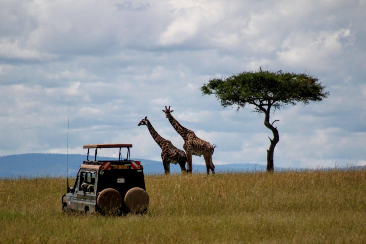 safari+n7.jpg