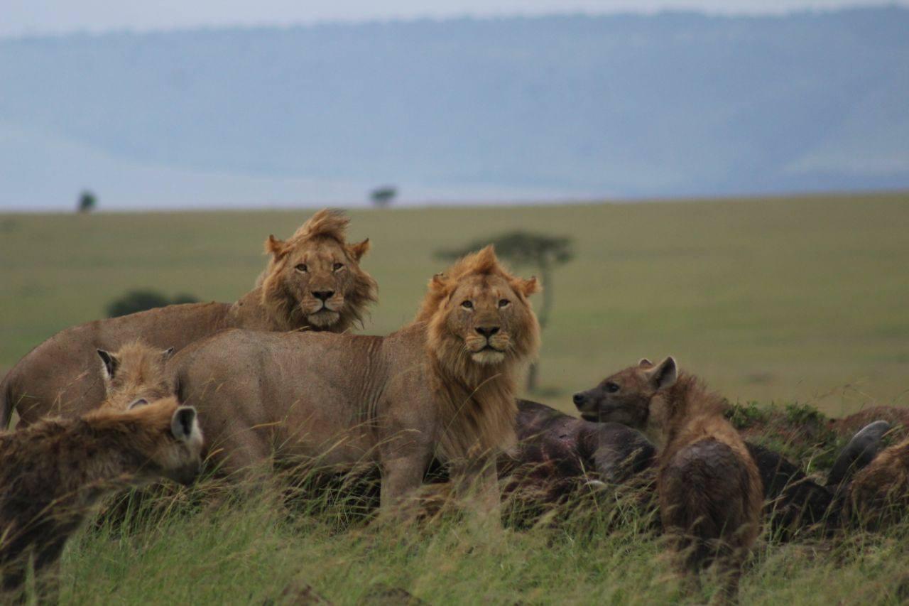 safari_n3.jpg