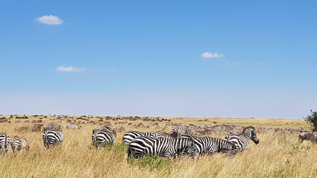 safari_n5.jpg